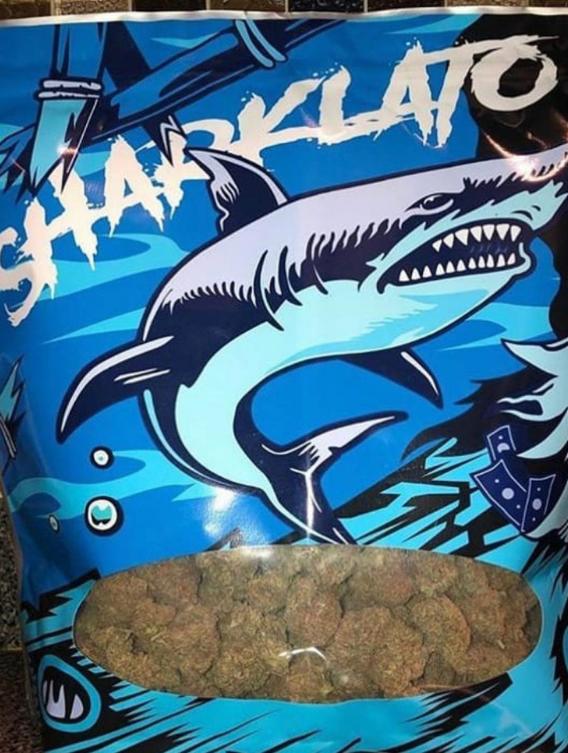 sharklato runtz strain, shark gelato strain